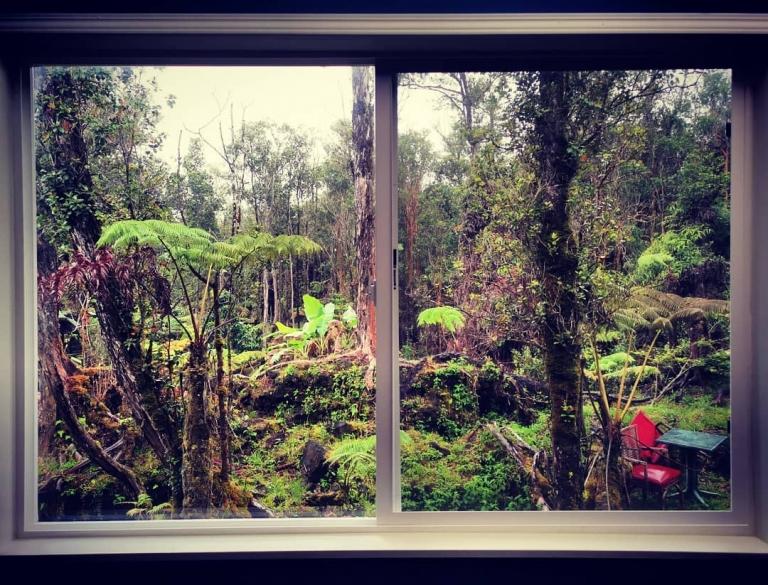 [Reisetagebuch Hawaii] Heute aus: Fern Forest, Hawaii