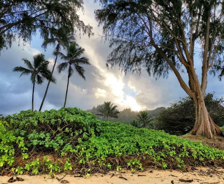 [Reisetagebuch Hawaii] Heute aus: Kokololio Beach Park