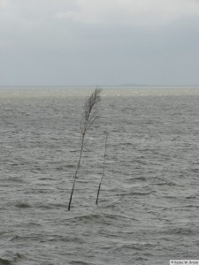 Nordsee - bei Dagebüll