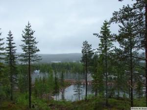 Dalarna/Björnpark Grönklitt