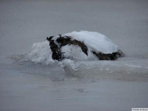 winter_2010_foehrDSC00668