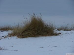 winter_2010_foehrDSC00714