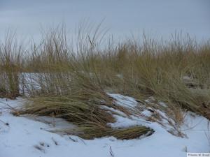 winter_2010_foehrDSC00716