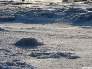 winter_2010_foehrDSC01020