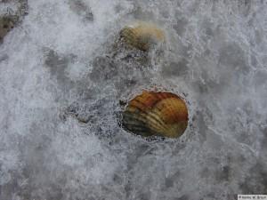 winter_2010_foehrDSC01031