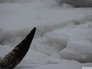 winter_2010_foehrDSC01076