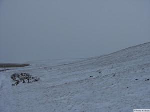 winter_2010_foehrDSC01207
